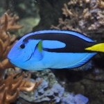 Wilhelmshaven - Aquarium