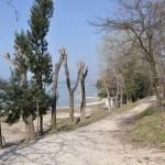 Radweg entlang des Gardasees